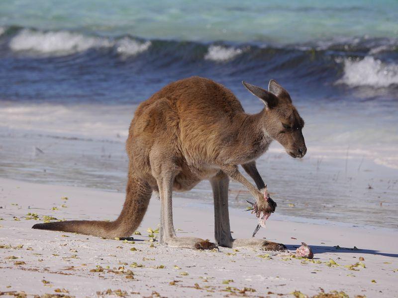 Australien_20181220_ (45)