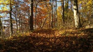 Herbstwald auf dem Weg zur Burg Teck