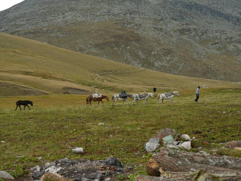 Lastpferde an der Hütte Ivan Vazov