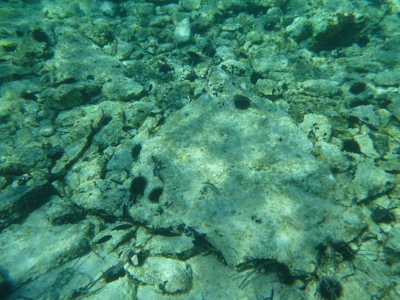 Seeigel und kleine Fische